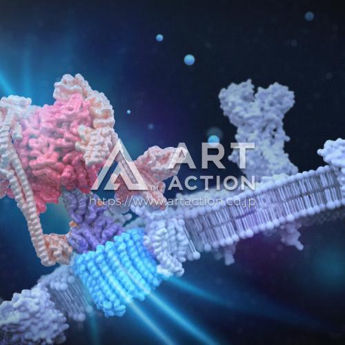 カバーピクチャー 細胞膜 科学 イラスト 3DCG